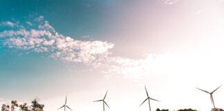 molinos de viento cerca de un bosque - negocio sostenible