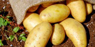 patatas en la tierra
